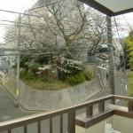 春には桜が