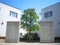 COSTAシンボルツリー