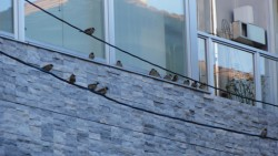 建物のに可愛い雀が休憩していました!